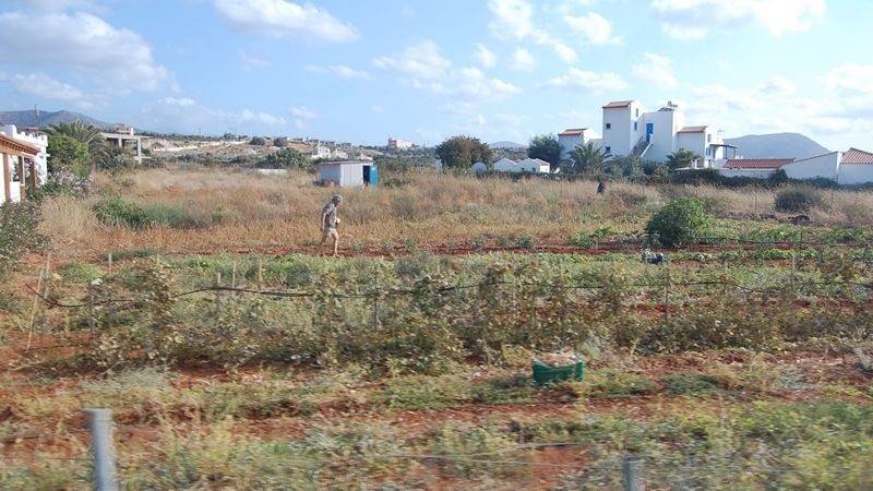 Agriculture degrading in occupied Crimea