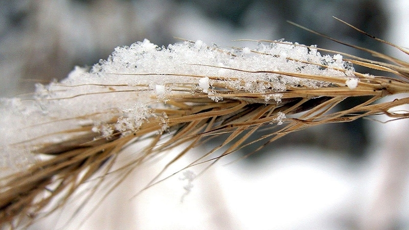 Amount of damage from April frosts in Crimea became known